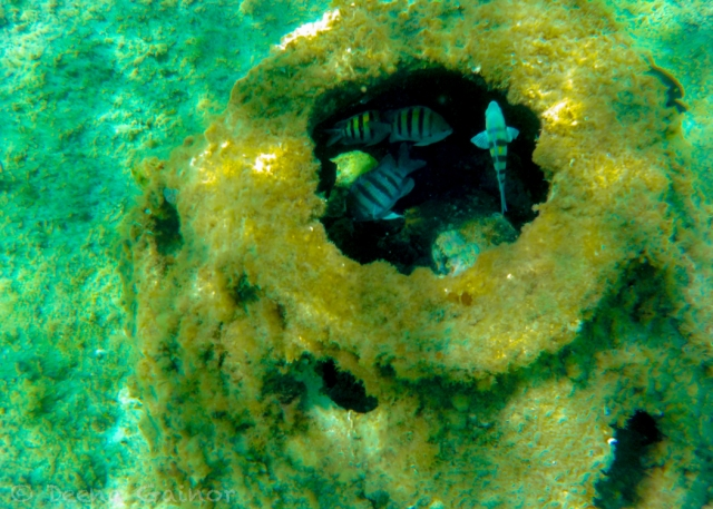 GG Blog Deena Cozumel Snorkel LR WM