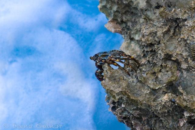 GG RTW Mexico Dreams PA Crab LR WM