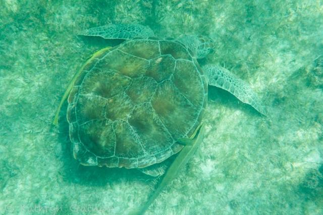 Katie Mexico Turtle 2 LR WM