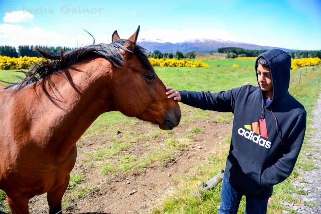 Horse at Tongariro National Park