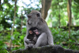 Monkey Mother-child love