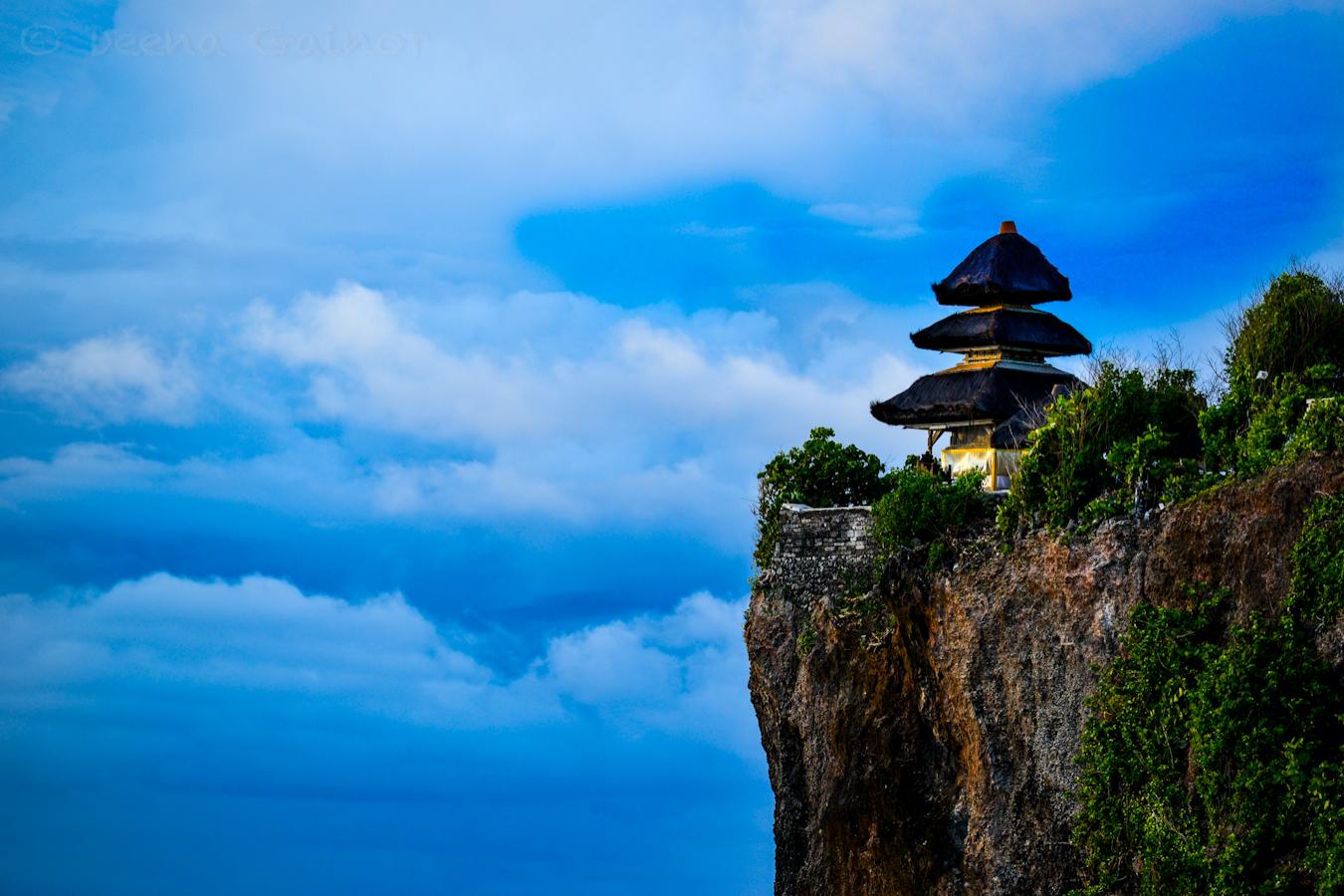 Image Result For Bali Wildlife Tourisma