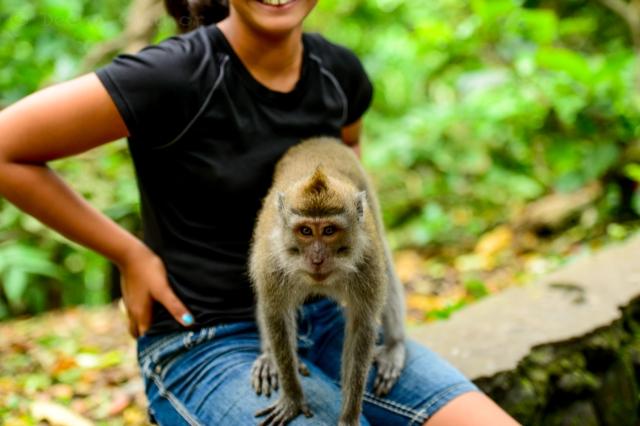 Monkeys climbing on Katie