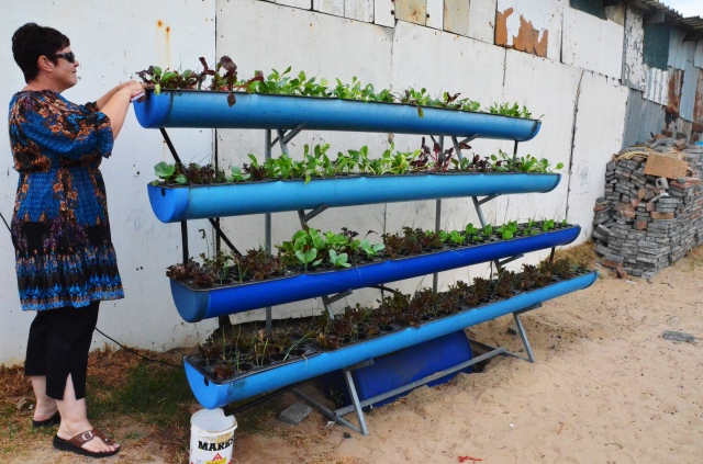 Lorna's Plants