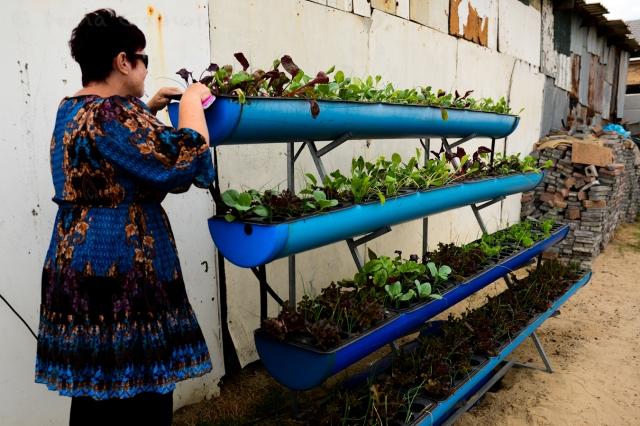 Lorna checking progress on the veggies