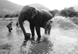 Thailand elephant 2