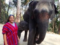 elephants 11