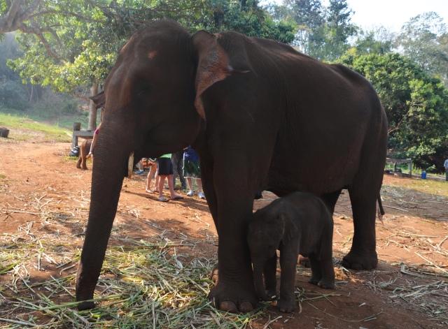 elephants 8