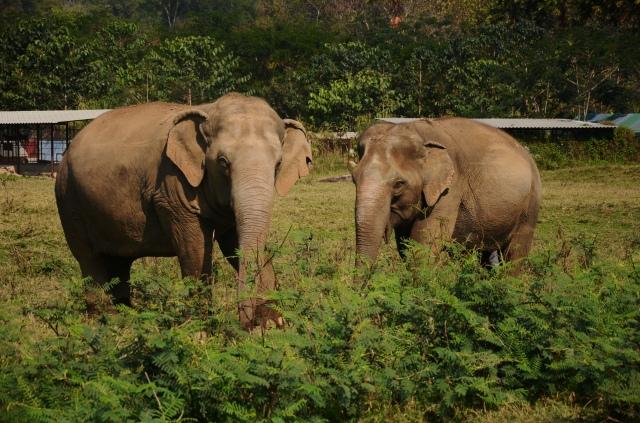 Thailand elephant 4